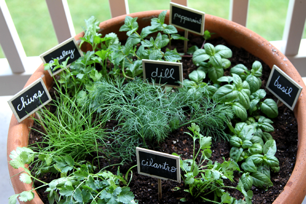 Tips For Maintaing Your Herb Garden Amazing Pictures